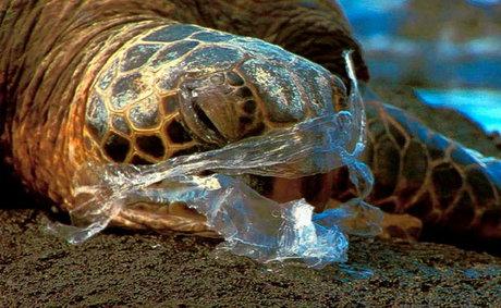 متوسط عمر استفاده از هر کیسه پلاستیکی تنها 12 دقیقه