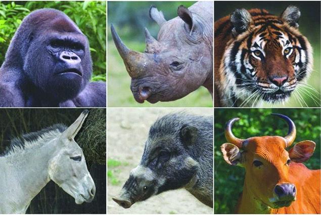 احتمال انقراض حیوانات بزرگجثه جهان تا سال ۲۱۰۰