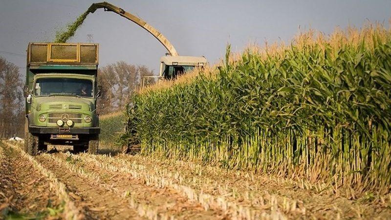 تهک و ارزش افزوده آن در کشاورزی