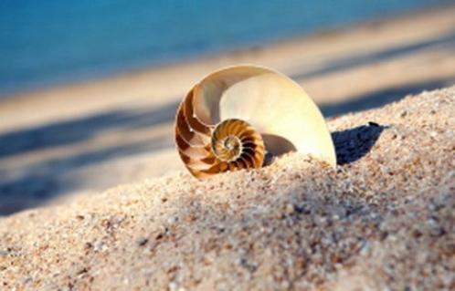 شور شدن سواحل پیامد دیگر تغییرات جوی