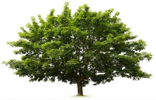 فرایندهای رشد و توسعه باید در تعامل با طبیعت و محیط زیست انجام شود