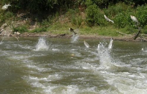 ماهیان در حسرت رودخانه های زلال