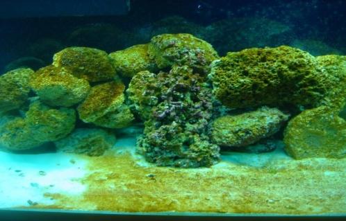 تولید پلاستیک زیست تخریب پذیر با جلبک دریایی