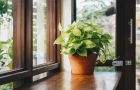 قابلیت جذب گازهای سمی توسط گیاه با پیوند دی ان ای
